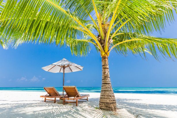0_Perfect-beach-view-Summer-holiday-and-vacation-design-Inspirational-tropical-beach-palm-trees-and